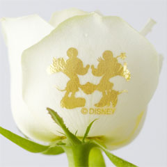 ミッキーマウスの花